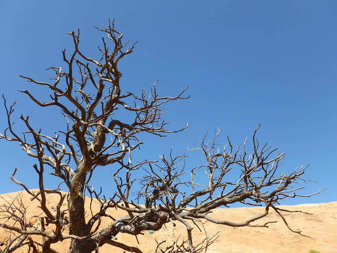 The twisted bare branches of a tree form organic patterns against a blue sky.