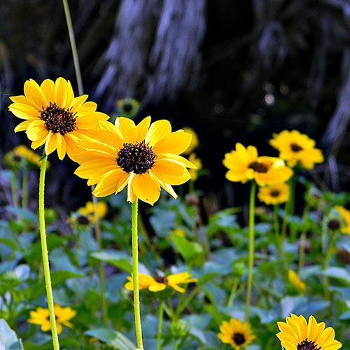 Bright beach flowers