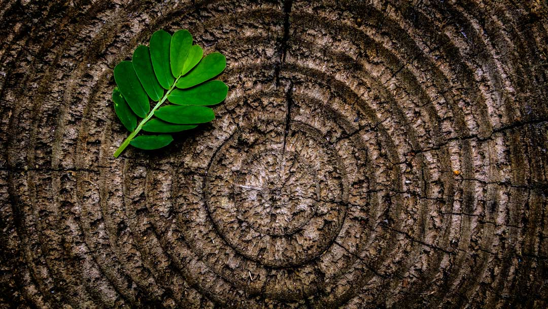 The ring patterns and texture of the tree stump contrast with those of a green leaf.